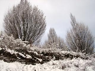 neige arbres.jpg