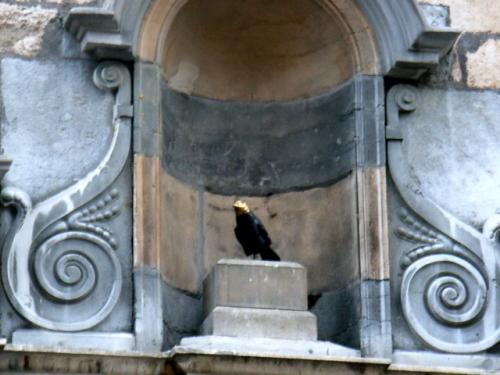 oiseau carmes1.jpg