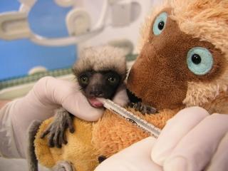 lemurien2_1.jpg